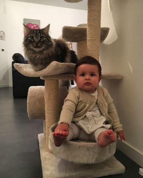 女の子を守る猫08