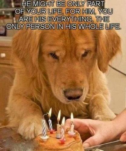 犬の飼い主ならわかること 038