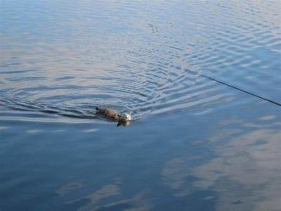 川に猫02