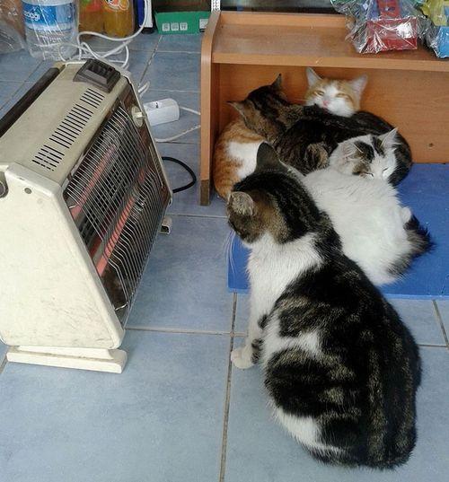 トルコの寒波から野良犬や野良猫を保護02