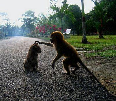 猿と猫の仲10