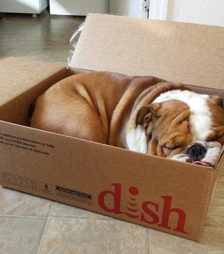 箱好きの犬04