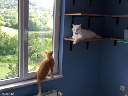 子猫、おとな猫を驚かすのが大好き06
