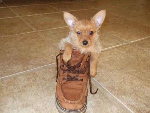 靴の中の犬18