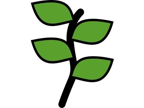 完璧に対称な植物