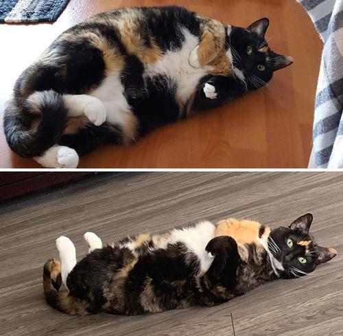 ダイエットに成功した猫たち09