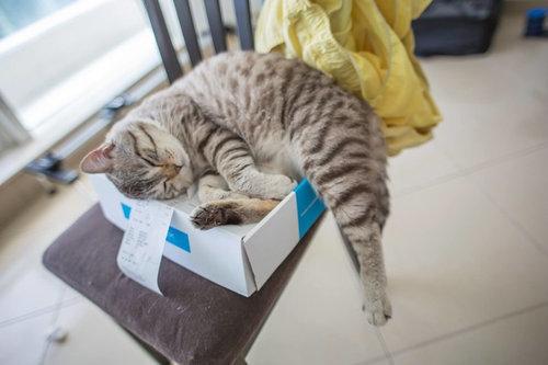 箱入り猫16