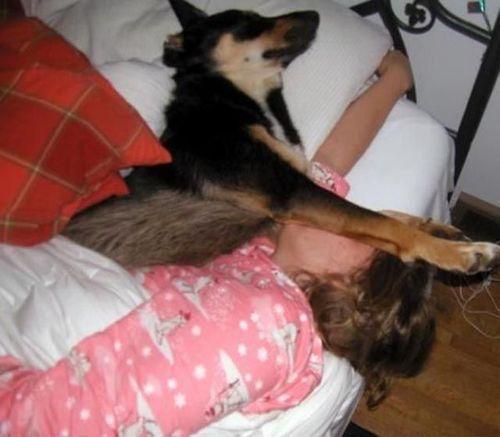 ペットと睡眠00