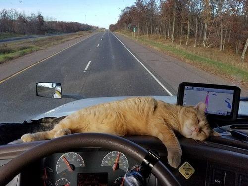 トラック運転手の猫が行方不明も意外な再会00