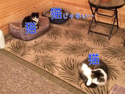 おばあちゃんと3匹の猫00