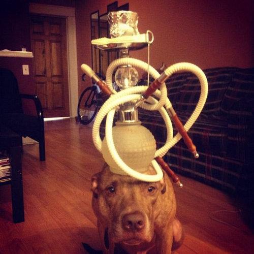 忍耐強い犬21