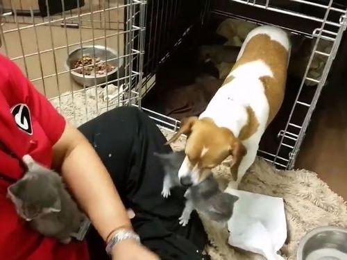 子猫を育てる犬のお母さん01
