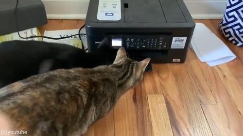 プリンターに興味津々な猫がかわいい01