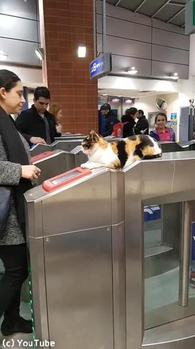 イスラエルの地下鉄の改札にニャンコ03