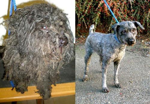 救助された犬や猫13