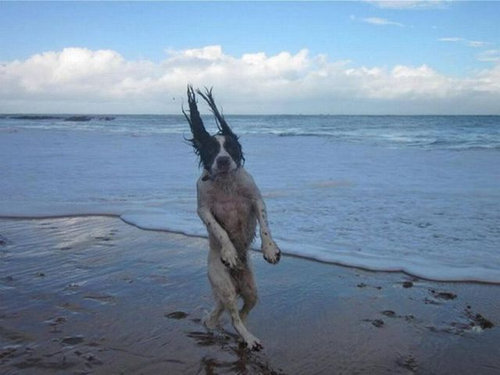 犬の決定的写真17