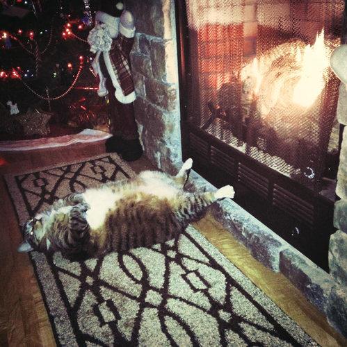 足を暖める猫01
