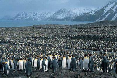 ペンギンのヒナが卵から出てくる一部始終06