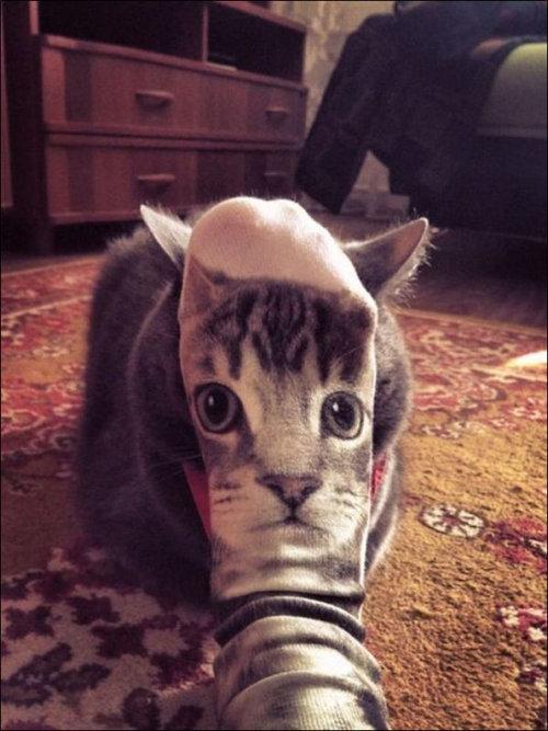 楽しい猫たち07