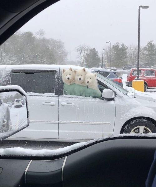 吹雪の日の隣の車がかわいかった01