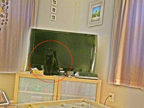 猫が見つからない03