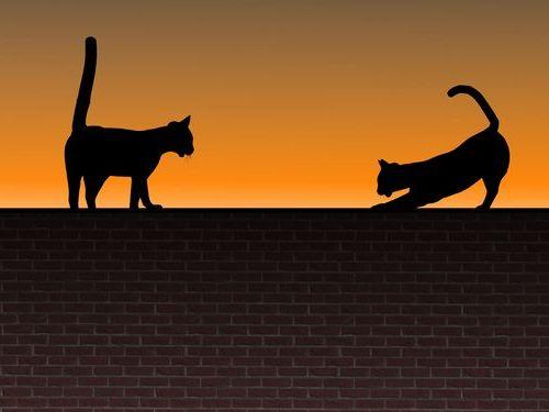 妹猫と兄猫00