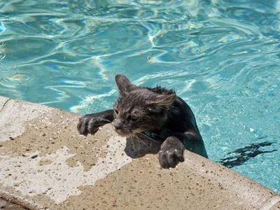 泳ぐ猫14