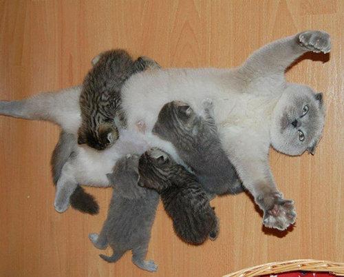 ママ猫&犬が子育てに奮闘してるときの顔02