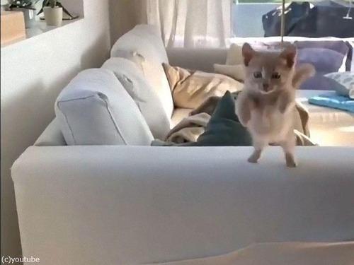 子猫の失敗ジャンプ01