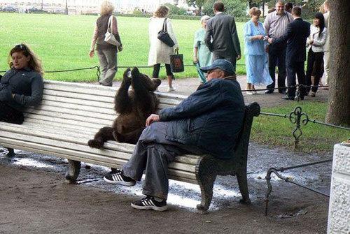 ロシアのクマ20