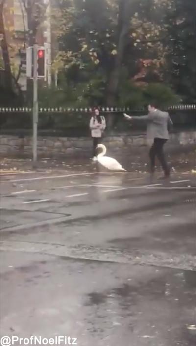 白鳥を助ける男性01
