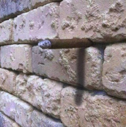 「壁に何が見える?」03