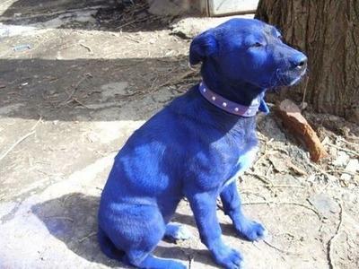 青い犬04