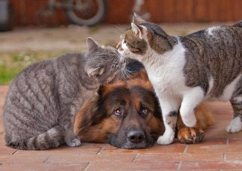 犬と猫がギュッ07