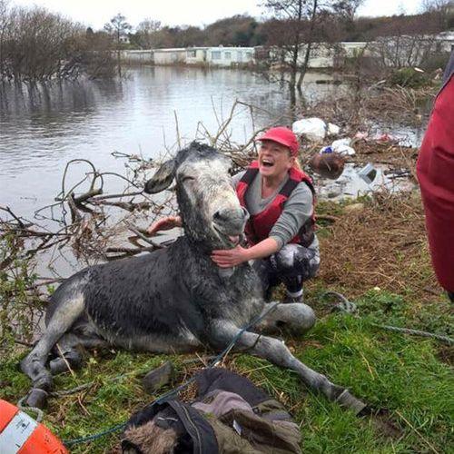 洪水から救出されたロバに笑顔04