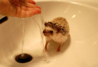 ハリネズミ洗い02