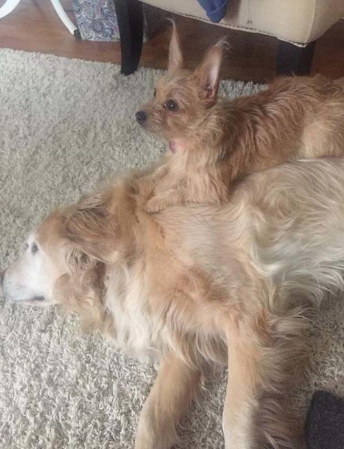 犬2匹のおねだり方法06