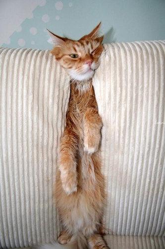 テトリス猫11