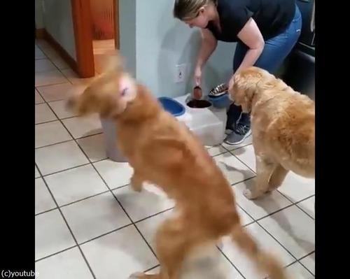 ご飯を待つとき同じ犬種でもこんなに違う01