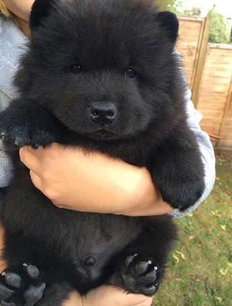 テディベアそっくりな子犬02