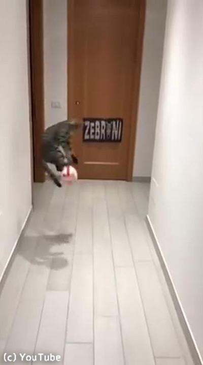 ゴールキーパー猫03