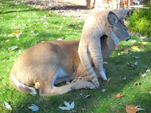 鹿と猫03