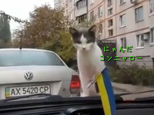 猫とワイパーの対決00