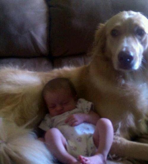 犬と娘の3年後02