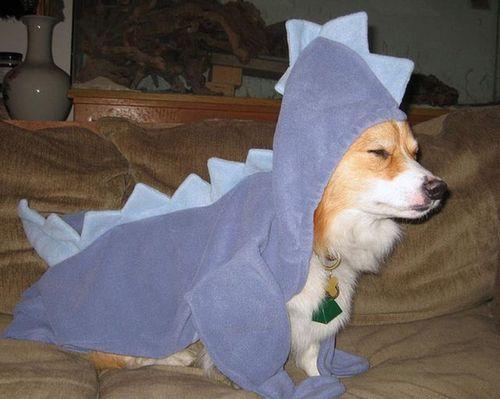 コーギー犬コスプレ09