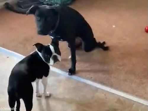 足がやわらかい犬03