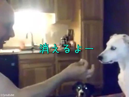犬、お父さんの手品に驚く00