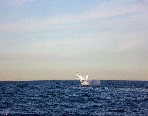 クジラウォッチング05