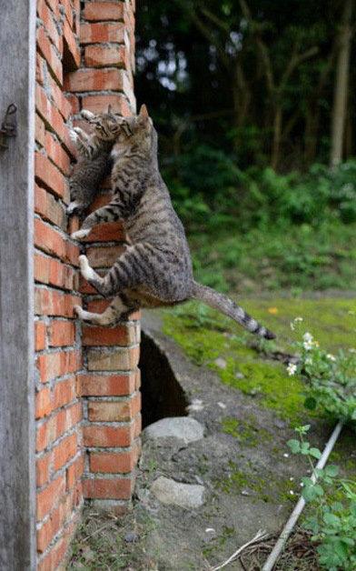 現実をくつがえしている猫12