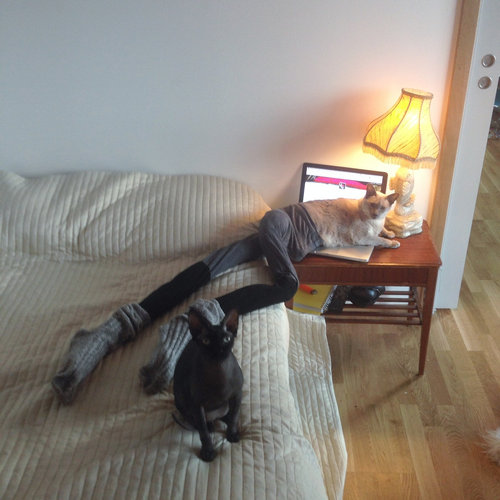 足の長い猫グッチ06